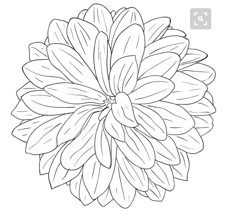 flower sketches drawing flowers line drawing drawing sketches drawing reference sketching
