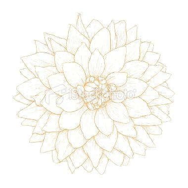 vector dahlia flower royalty free stock vector art illustration 21 flower sketch images