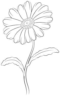 learn how to draw a daisy beginning with the top composed of two simple ovals and then moving down to the stem in this simple step by step flower