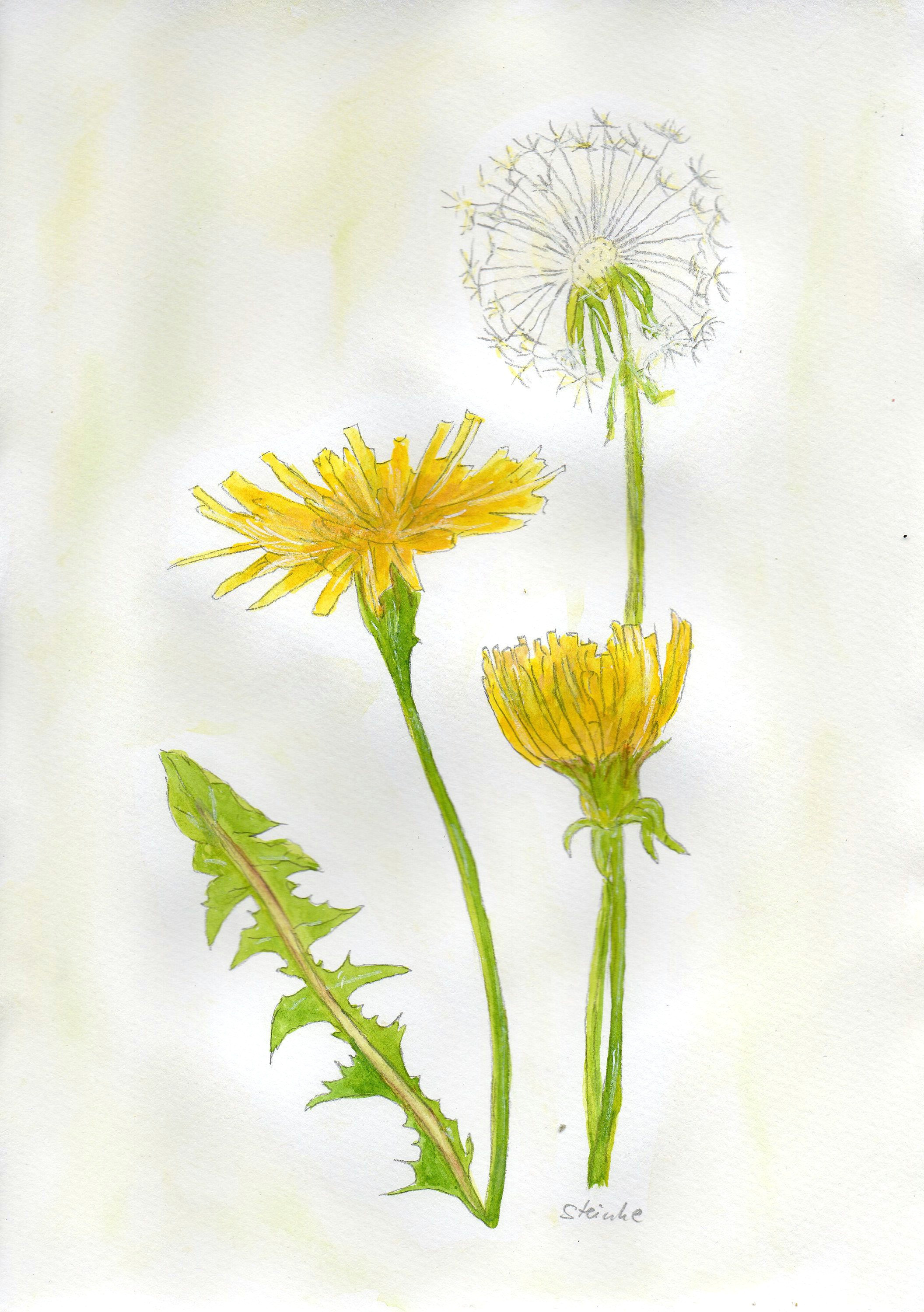 colorful drawings flower pictures beautiful paintings new art dandelions picture frames