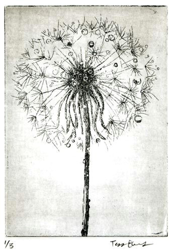 dandelion root drawing google search