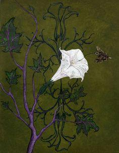8ed234fcb1de62daf8c3f65e39735a5b flora flowers organic art jpg