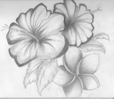 Drawing Of Different Flowers 28 Best Line Drawings Of Flowers Images Flower Designs Drawing