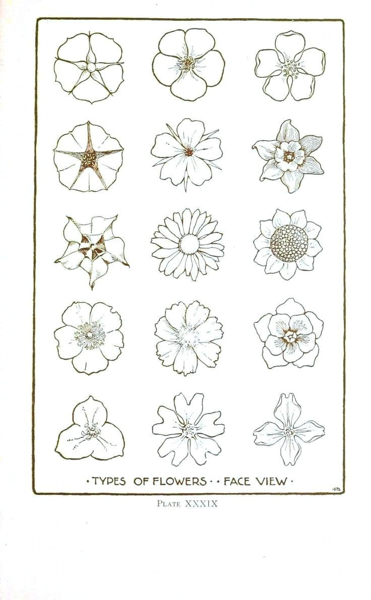 how to draw different types of flowers step by step 25 trending simple flower drawing ideas