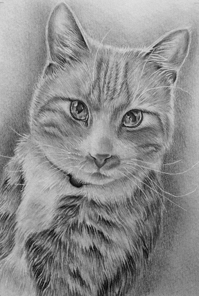cat lover gifts cat lovers pet memorials cat drawing animal drawings