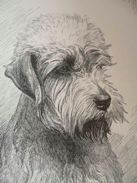 dandie dinmont terrier dog print vintage 1935 dog bookplate unique collectors gift birthday anniversary christmas xmas dog gift present