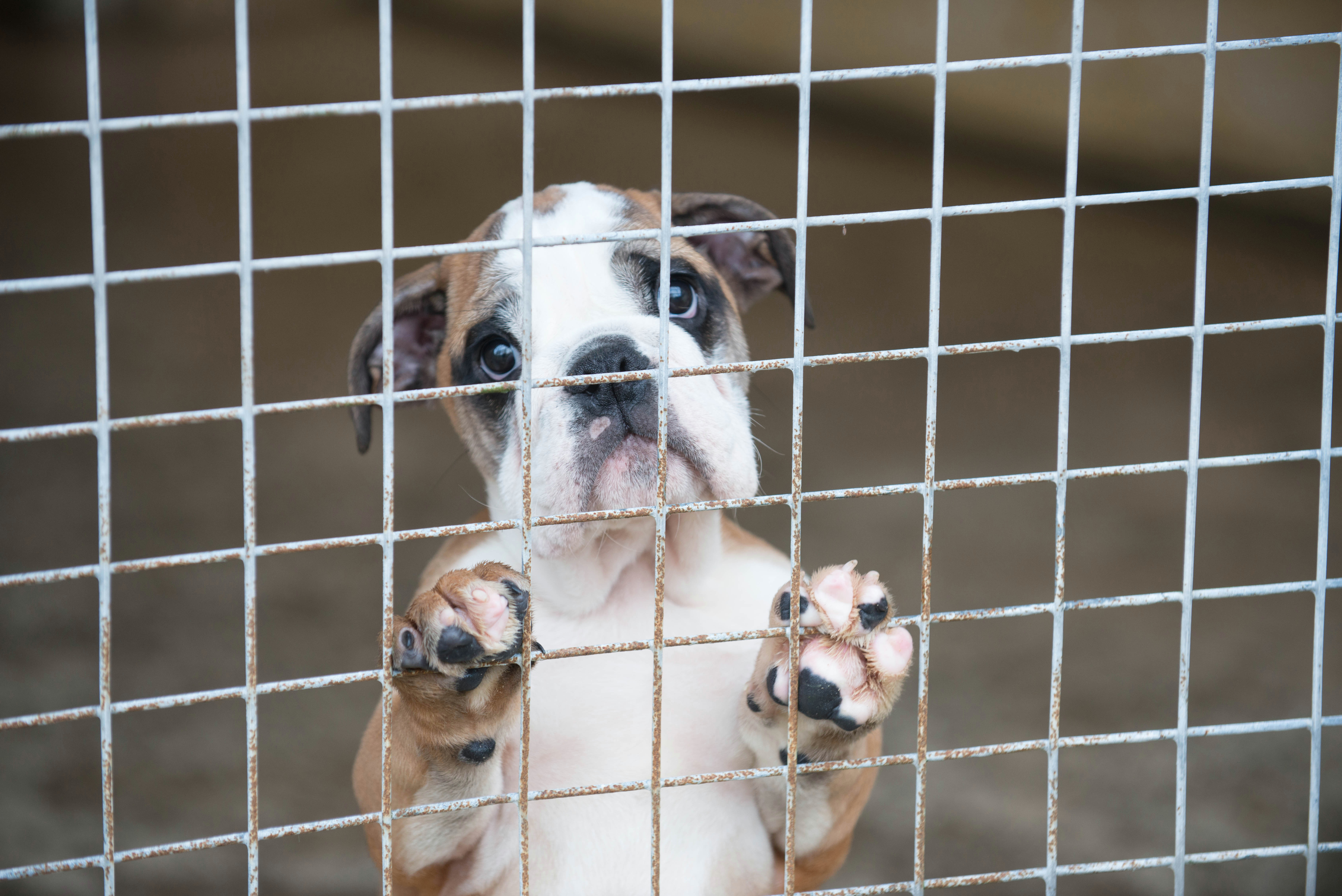 european commission asked to draw up action plan to end illegal pet trade