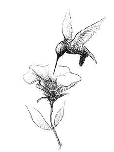 Drawing Of Dying Flowers Die 95 Besten Bilder Von Flowers Ink Scribble Und Tatoos