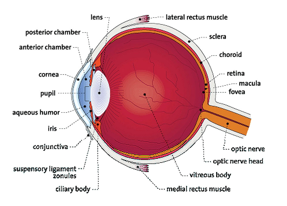 Drawing Of Eye Structure Medical Eye Center Diagram Of the Eye Medford