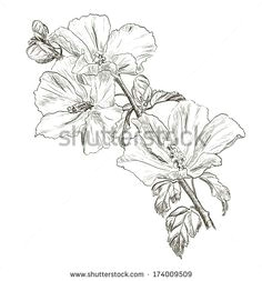 illustration about vector hand drawing hibiscus flower illustration of design background decoration 37589075