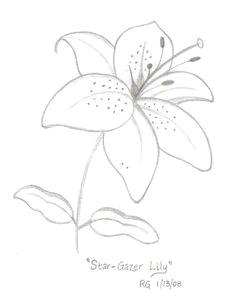 star gazer lily drawing photo by rlgooch photobucket flower drawing tutorials flower sketches