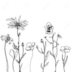 illustration of rectangular floral compositions with ink drawing herbs and flowers in the square doodle wild plants monochrome black line drawing floral