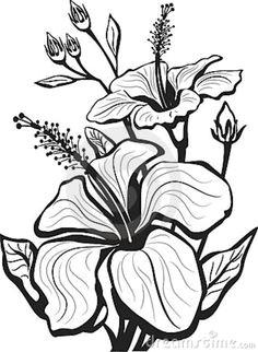 hibiscus flower drawing google search a ablony uma lecke kresby vlastnorua na va roba marketerie
