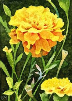 happy marigolds aceo watercolor painting marigold flower flower images flower art floral