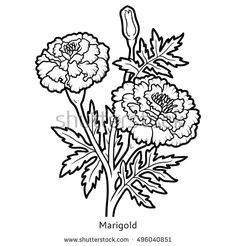 royalty free images royalty free stock photos doodle frames marigold flower book drawing flower drawings art reference coloring books zentangle