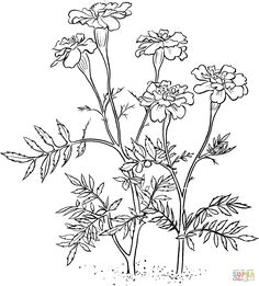marigold 2 super coloring marigold tattoo marigold flower flower coloring pages colorful