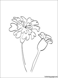 Drawing Of Flower Marigold 53 Best Marigolds Images Marigold Flower Coloring Books Coloring