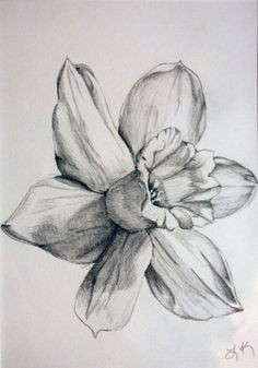 daffodil drawings black and white daffodil by tadaishar traditional art drawings landscapes scenery 2010