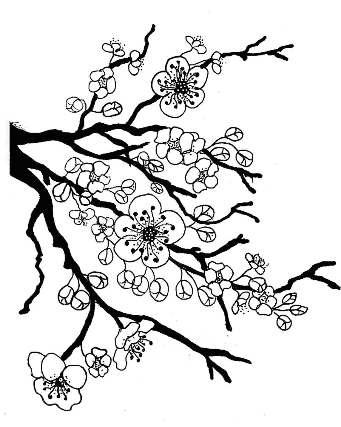 sakura bloom drawing lotus blossom coloring page full bloom