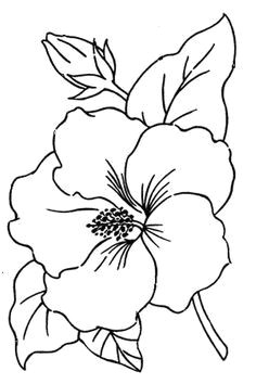 flor de hibiscus desenhos pesquisa google hibiscus flower drawing flower pattern drawing flower