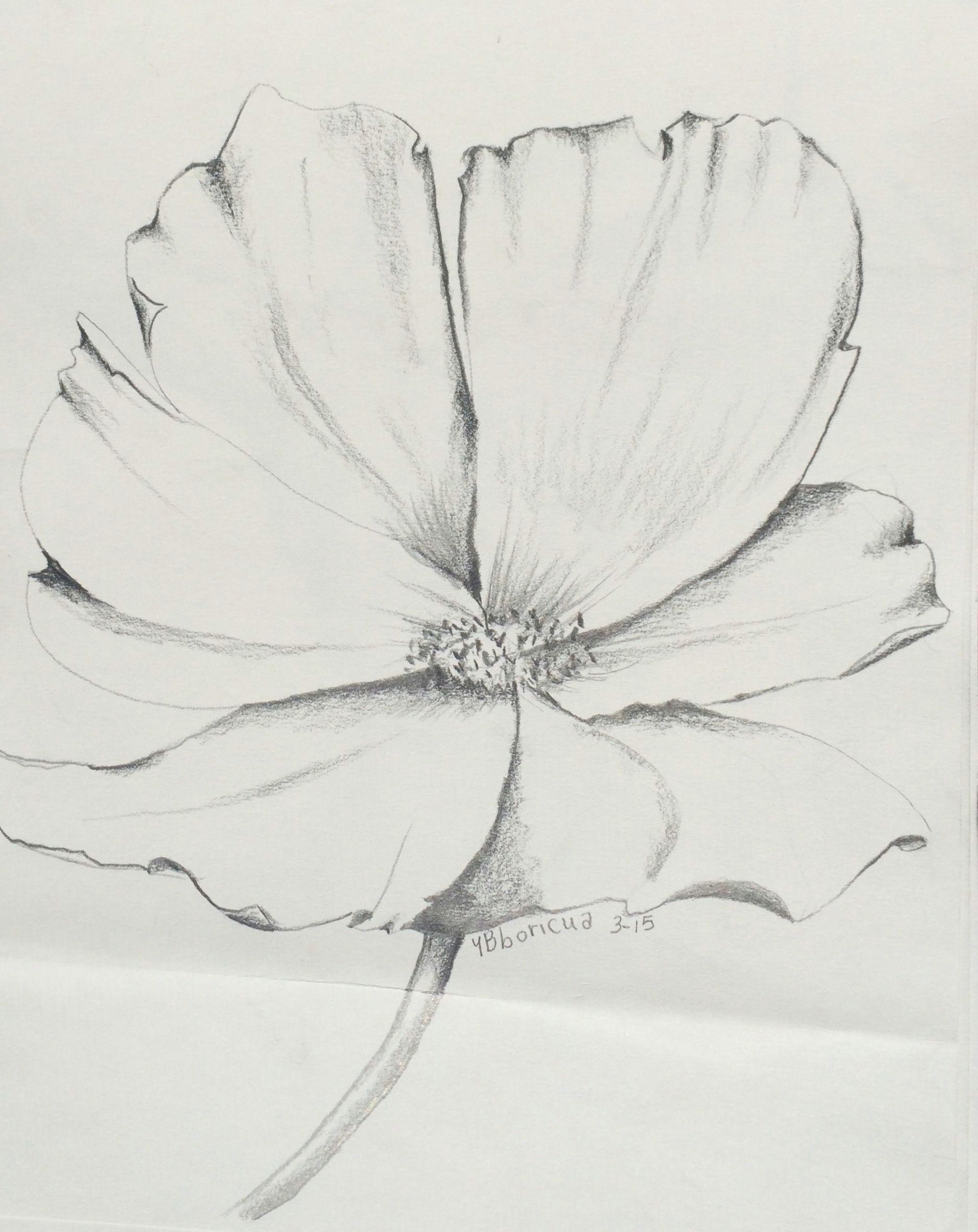 flower 7 artist ybboricua description original pencil drawing march 18 3015