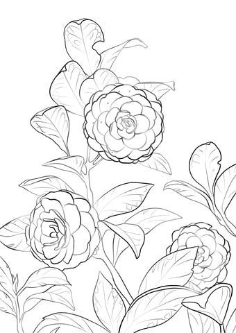 japanese camellia coloring page anime drawings sketches art drawings flower coloring pages coloring
