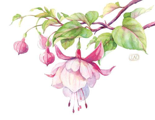 watercolor fuchsia flower by natalia tyulkina on creative market