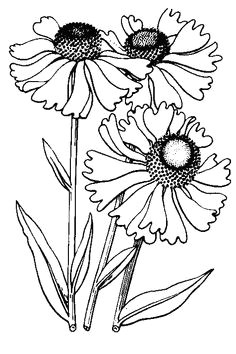 more line drawings http www pinterest com carolinespoem drawing