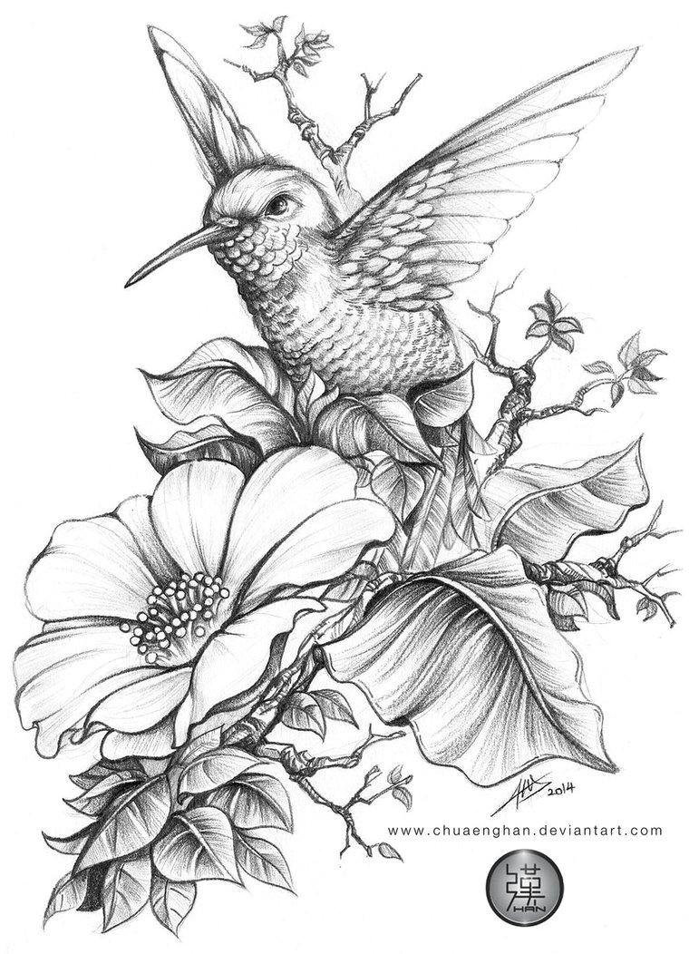 hummingbird e e done for a book cover a4 size hb 3b 6b