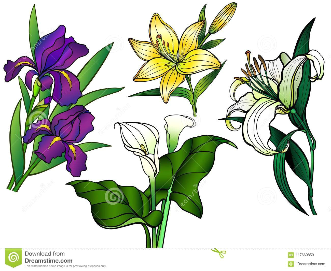 linear flowers and leaves with a gradient callas lilies irises garden flowers