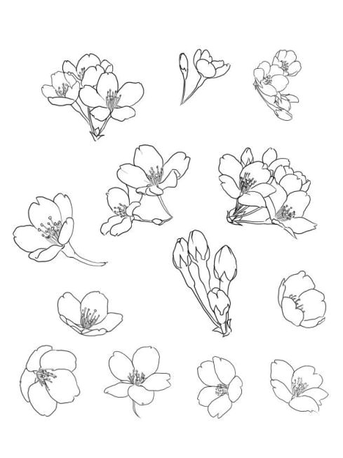 cherry blossom drawing cherry drawing cherry blossom watercolor cherry blossom flowers floral