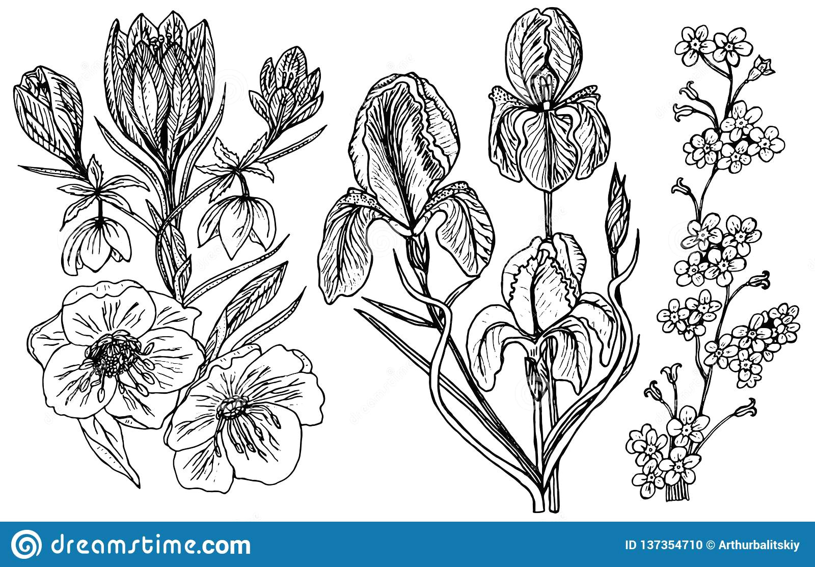 wild flowers with leaves set of wedding botanical plant with leaf and buds botanical organic spring herb engraved hand drawn in doodle sketch