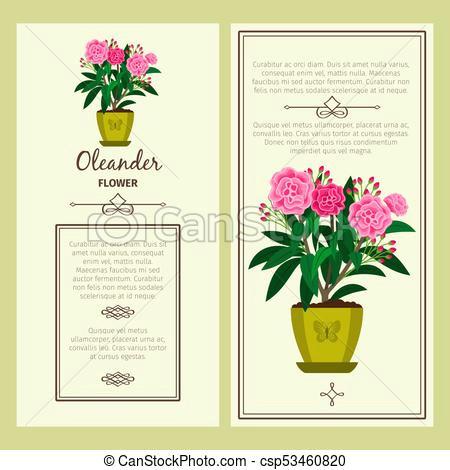 oleander flower in pot banners csp53460820