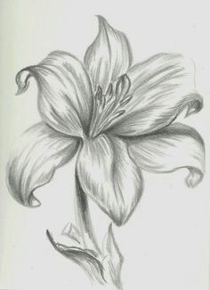orquidea dibujo a lapiz buscar con google drawing flowers flower pencil drawings simple
