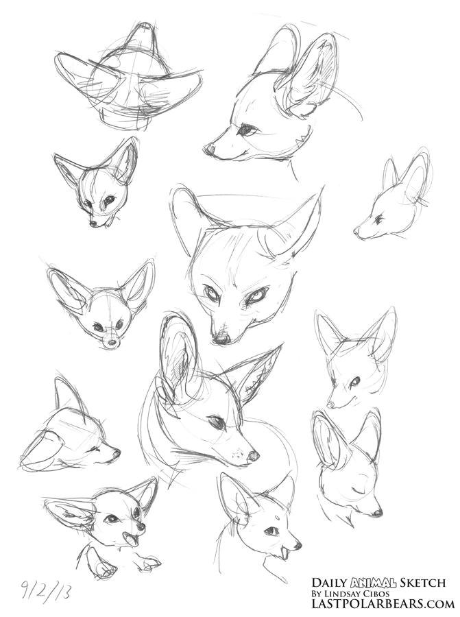 Drawing Of Fox Eyes Daily Animal Sketch Giraffe and Fennec Fox Last Of the Polar