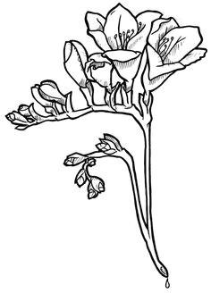 freesia flower flower outline freesia flowers tattoo drawings flower drawings pug tattoo