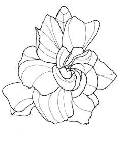 line drawing flowers gardenia