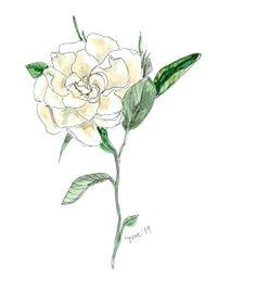 gardenia drawing google search