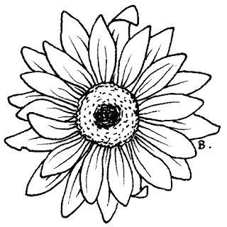beccy s place sunflower gerbera