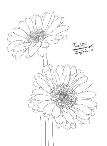 Drawing Of Gerbera Flower How to Draw Gerberas Step by Step 4 Watercolor Drawings Art