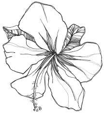 image result for gladiolus flower tattoo drawing flower tattoo drawings doodle drawings gladiolus flower