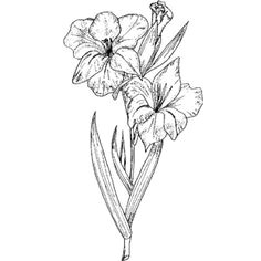 gladiolus flower drawing images gladiolas tattoo gladiolus flower tattoos lilies tattoo flower tattoo