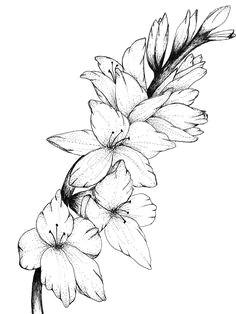 gladiolus floral print of original drawing by inspiredinspirit on etsy https www