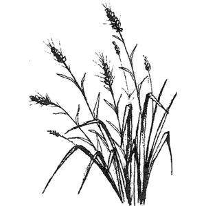 grass drawing magenta flowers wheat grass botanical drawings tatting blade