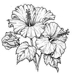 resultado de imagem para how to sketch a hibiscus flower