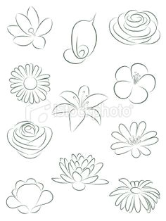 set of flowers vector illustration