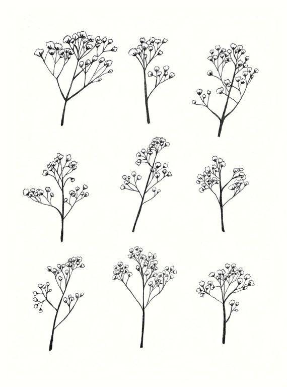 gypsophila baby s breath flower illustration a4 by mayandjuniper
