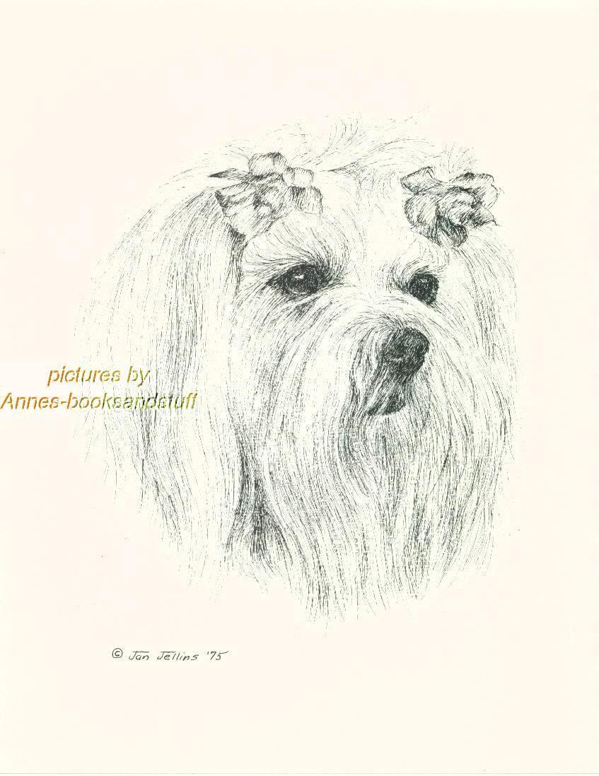44 maltese dog art print pen and ink drawing jan jellins ebay