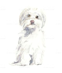 maltese dog royalty free stock vector art dog vector vector art maltese