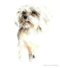 maltese magic by sherry cummings watercolor animals watercolor art maltese dogs dog paintings